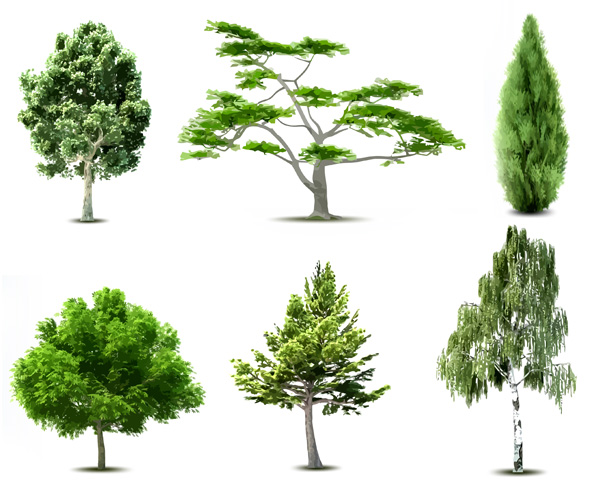 Potatura alberi pratomax for Alberi ornamentali sempreverdi