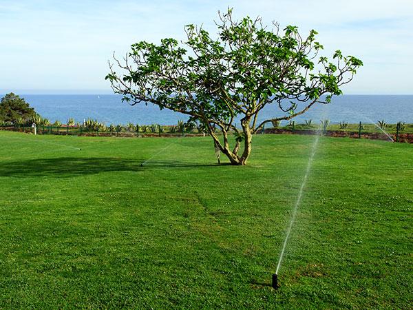 irrigazione prato quanta acqua